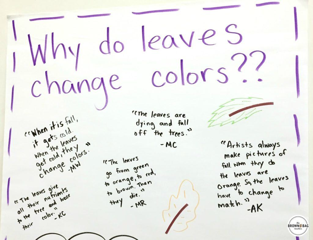 leaf chromatography why do leaves change color the brown bag