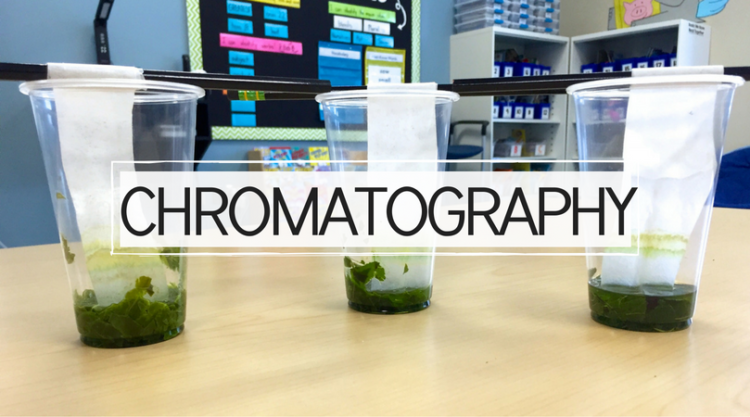 Leaf Chromatography: Why do leaves change color?