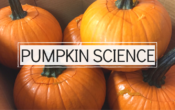 Earth Day Recycling Demonstration: From Pumpkin to Compost